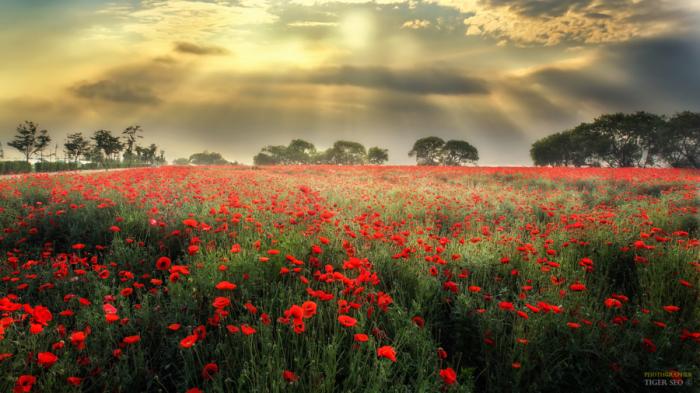 Завораживающая красота ярких цветов. Автор фотографии: Тигр Сео (Tiger Seo).