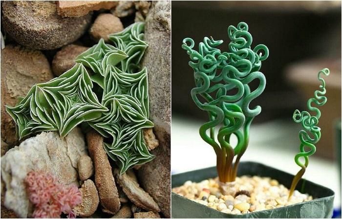 Фантастические комнатные растения, которые реально существуют.
