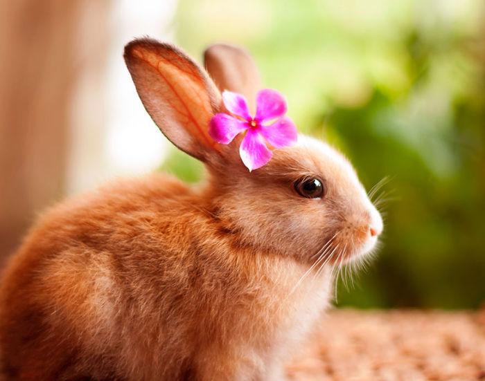 Доброжелательный, веселый и милый зверек. | Фото: lifeguide.com.ua.