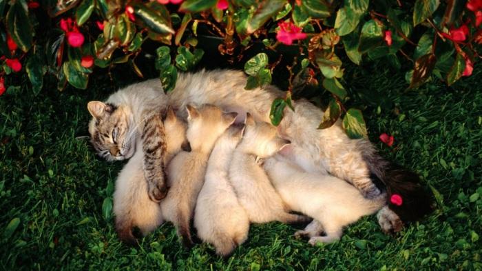 Одно из наиболее популярных домашних животных наряду с собакой. | Фото: http://qiqru.org/.