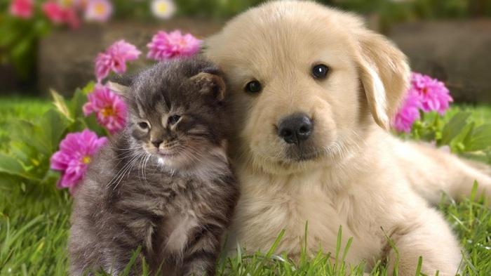 Милейшие животные, которые обитают у многих жителей на Земле. | Фото: nastol.com.ua.