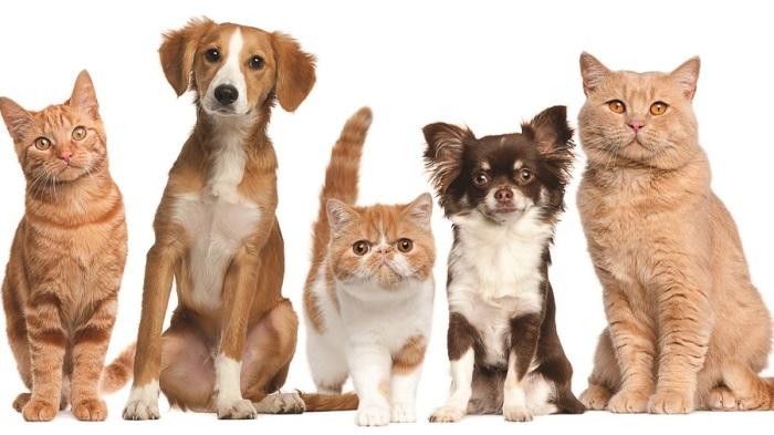 Животные, которые были выведены человеком. | Фото: anywalls.com.