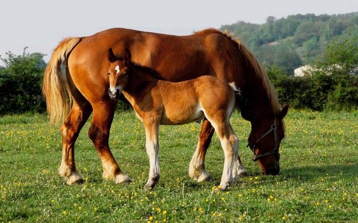 Стройное и грациозное животное. | Фото: nevseoboi.com.ua.