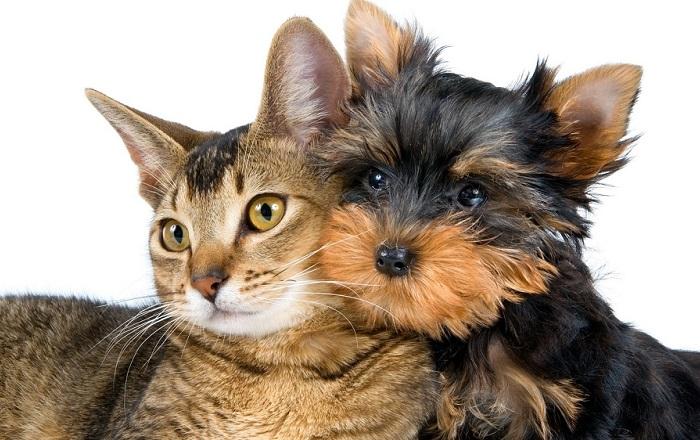 Всемирный день домашних животных. | Фото: walkservice.ru