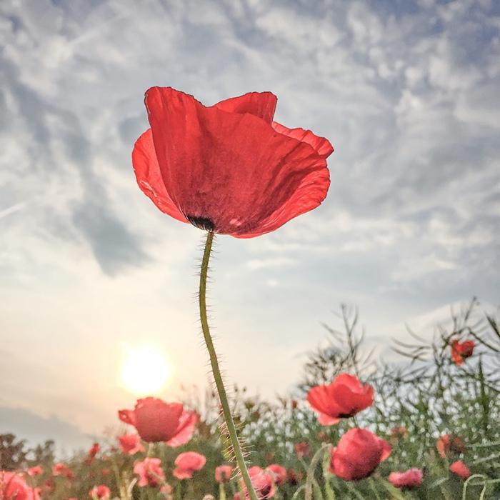 Победитель в категории «Цветы». Автор фотографии: Lone Bjorn.