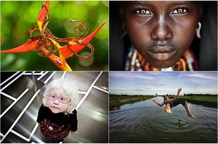 Первые победители фотоконкурса Smithsonian 2015.