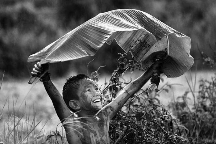 Зонт из листа большого дерева. Фотограф: Чи Кеонг Лим, Малайзия.