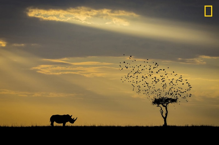 Автор снимка «Силуэт носорога» - фотограф Хай Чуин Сим (Khai Chuin Sim) из Малайзии.
