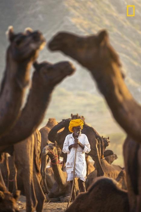 Автор снимка «Мой верблюд – мой щит» - индийский фотограф под псевдонимом Sabbyy Sg.