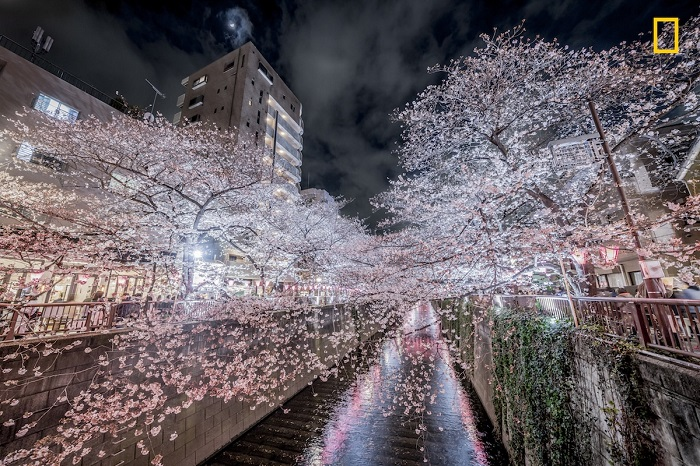 Автор снимка «Цветущая сакура» - японский фотограф Хироки Иноуэ (Hiroki Inoue).