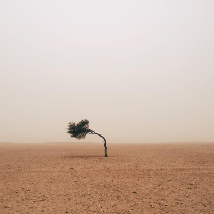 Дерево в пустыне на границе с Саудовской Аравией. Фотограф Руайридх Макглинн (Ruairidh McGlynn).