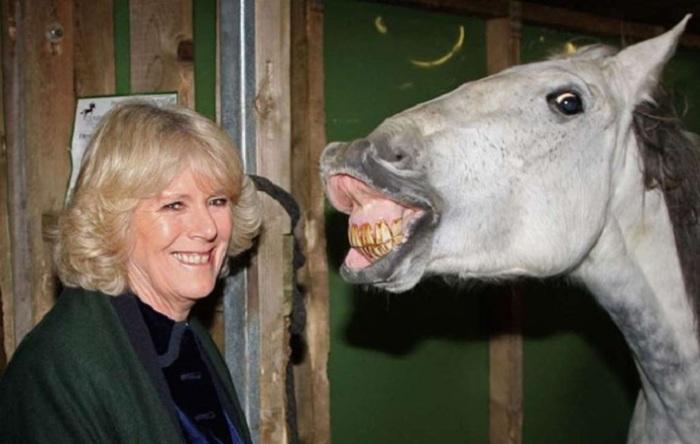 Даже лошади в конюшне на «Olympia Horse Show» в Лондоне были рады визиту герцогини Уэльской.