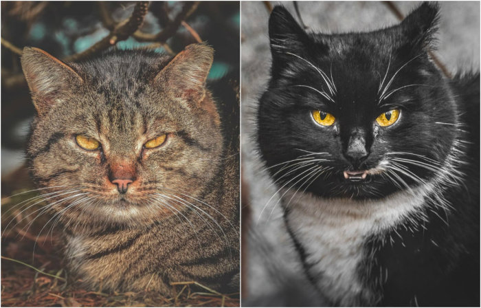 Эти глаза животных говорят о многом.