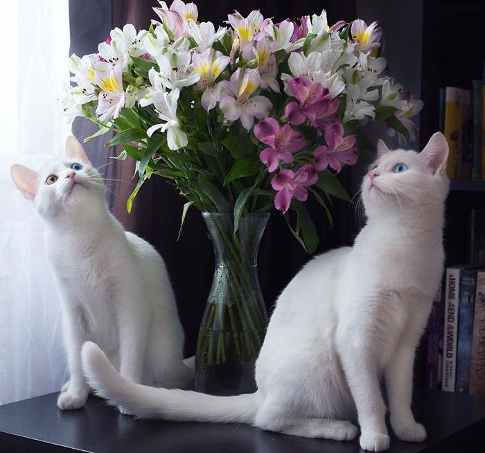 Красивые кошки-близнецы.