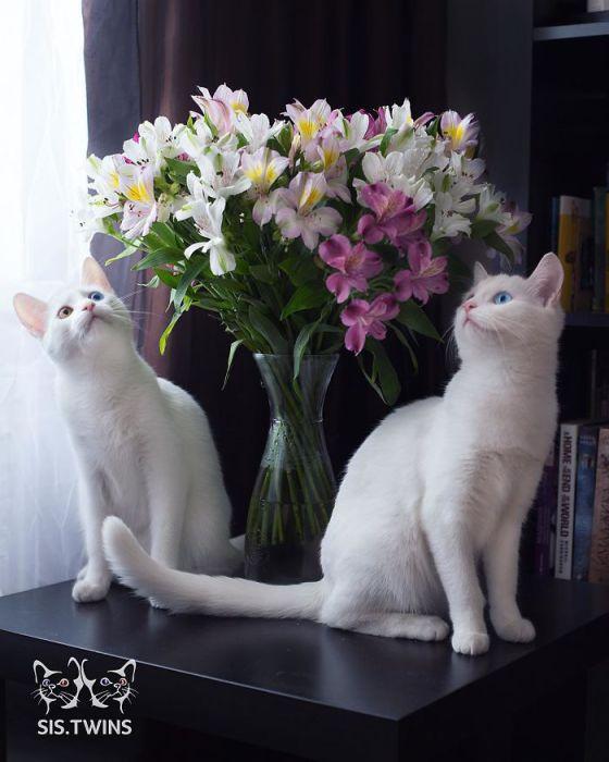 Кошки окружили прекраснейший букет цветов.