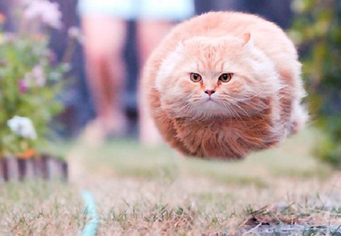 Неопознанный летающий кото-объект.
