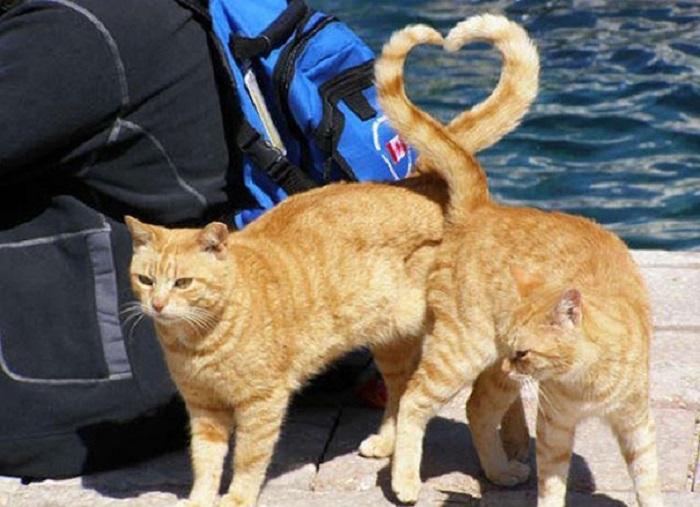 Настоящая кошачья любовь.