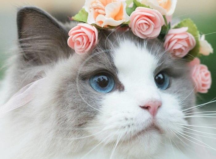 Настоящая принцесса!