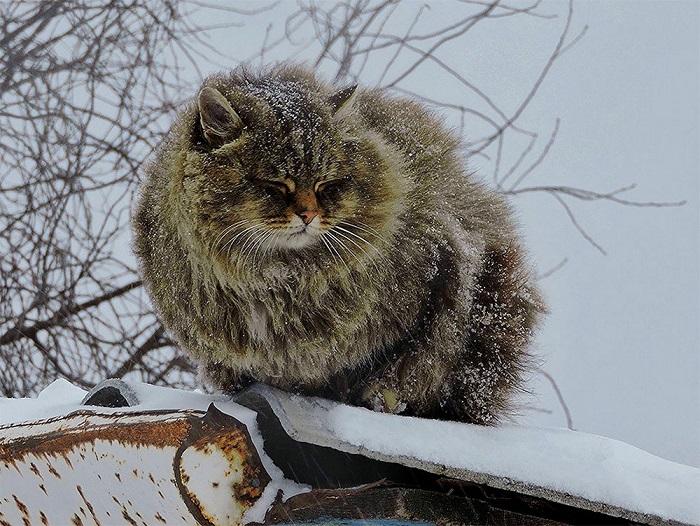 Один из пушистых жителей «Кошландии».
