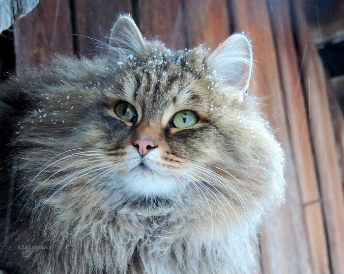 Элегантный кошачий портрет.