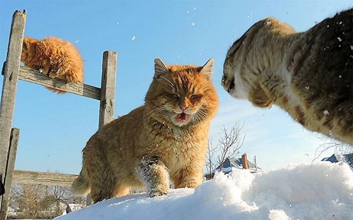 Когда светит солнышко – даже у кошек сразу улучшается настроение.