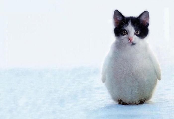 «Пингвикот».