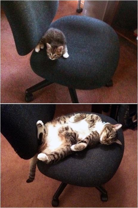 Кресло для кота.