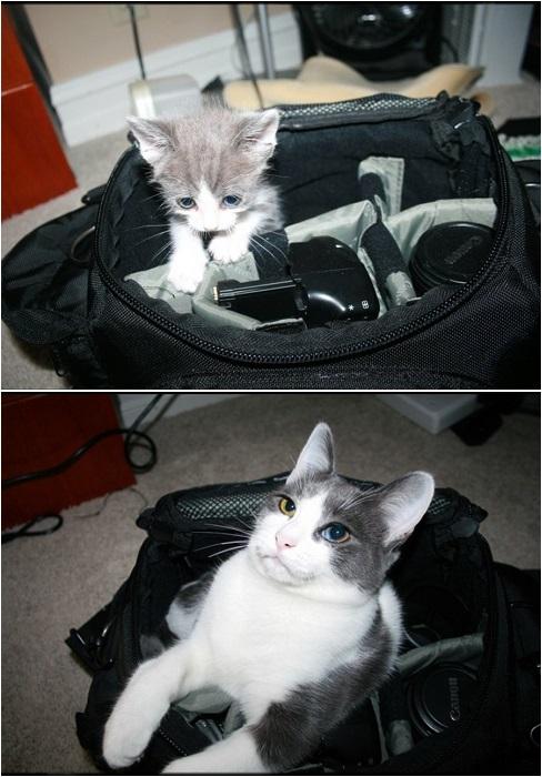 Спасённый кот 6 месяцев спустя.