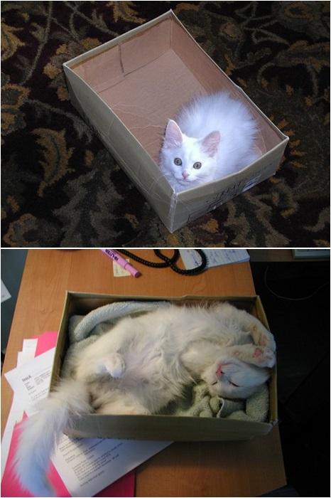 Коробка-любимое место животного.