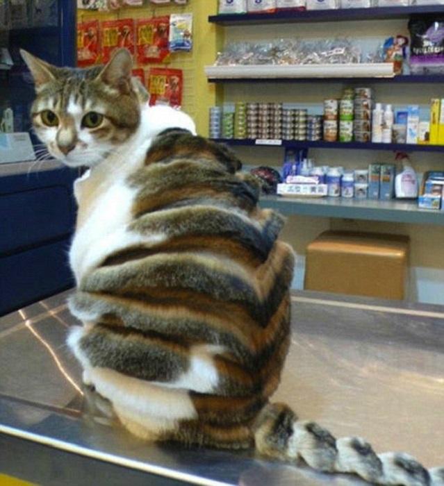 Кот с 3-D полосками.