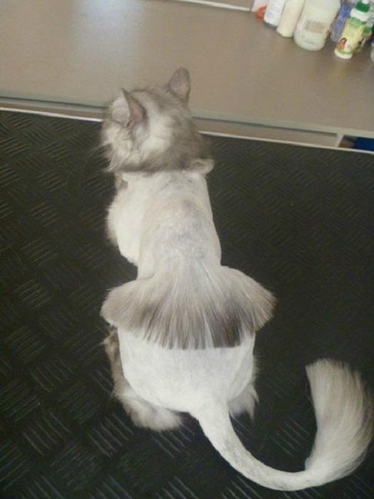 Модный женский тренд добрался и до кошачьих причесок.