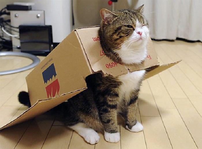 Страстный любитель коробок.