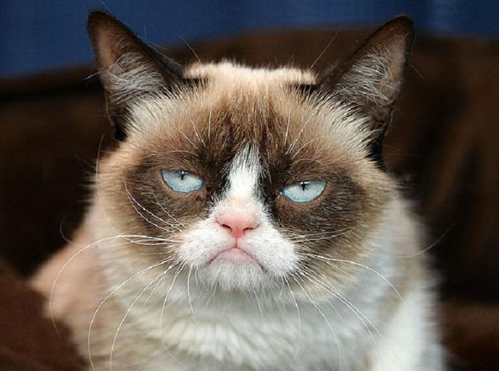 С кошкой всё впорядке, просто такой её сделала природа, у неё всегда как бы недовольное выражение лица — антиулыбка.
