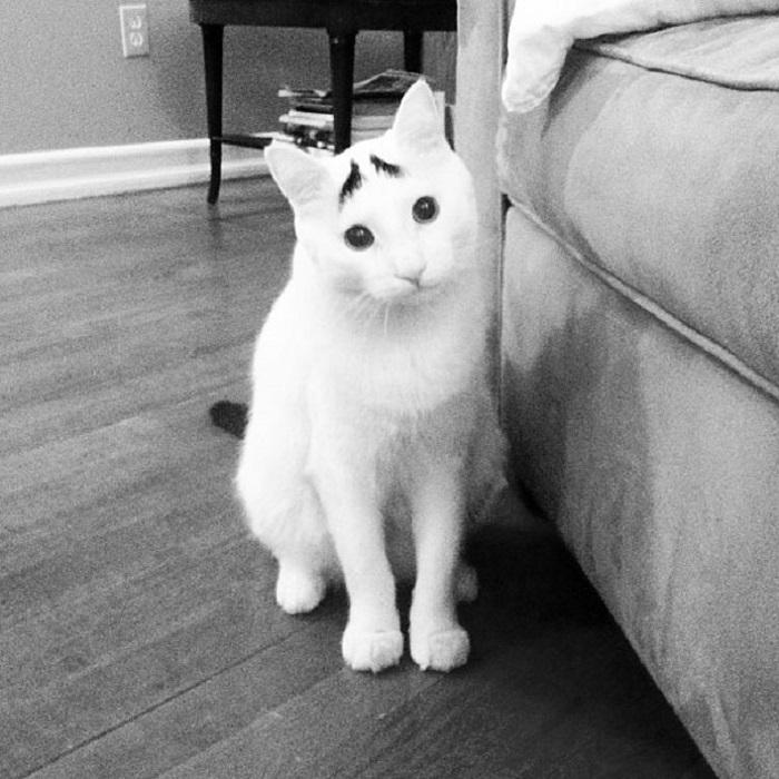 Сэм, наверное, единственный в мире кот с густыми черными бровями, которые придают его мордочке такое жалостливое выражение, что это может растрогать любого.