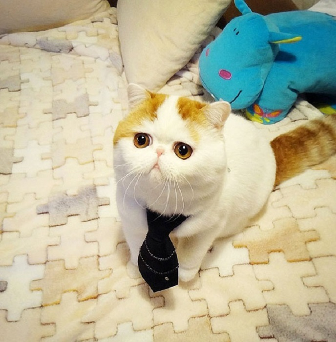 Самый милый и няшный в мире кот.