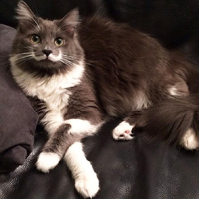 Кот с удивительным окрасом на мордочке.