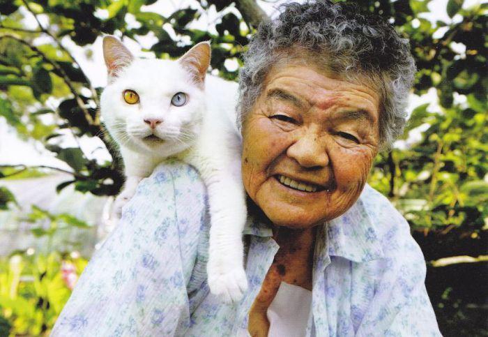 Милая кошка с гетерохромией.