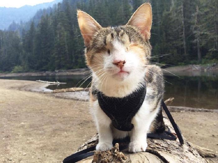 Кошка каким-то «третьим» глазом хорошо видит и ориентируется на местности, смело идет вперед.