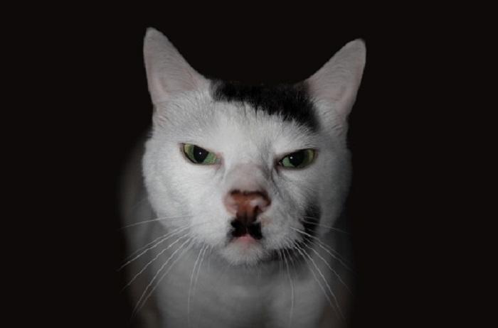 Самый милый и добрый кот в мире, выживший после избиения из-за того, что у него под носом красуется черное пятно, похожее на усы фюрера.