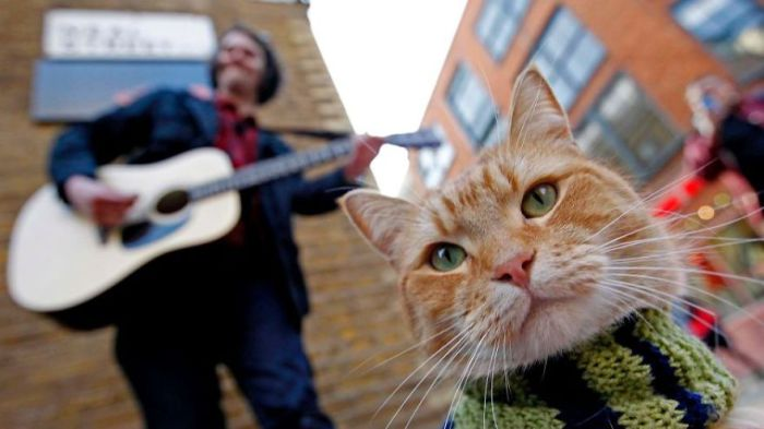 Рыжий Боб, питомец Джеймса Боуэна - уличного лондонского музыканта.