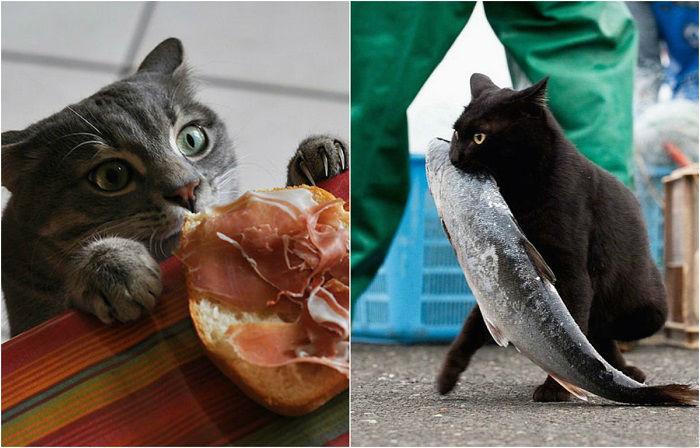 Коты-воришки пойманные с поличным.