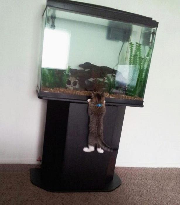 Удачное восхождение на аквариум с рыбками.