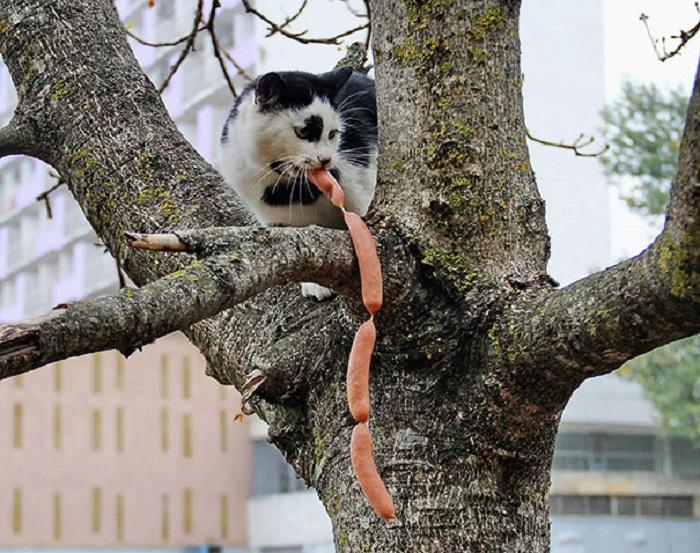 Спрячу на дереве, так надежней.