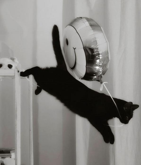 Любитель попрыгать с высоты.