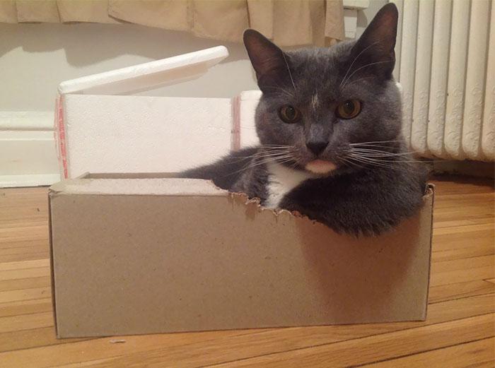 Некоторые коробки котам приходится самостоятельно усовершенствовать, чтобы они смогли вместить столь грациозные формы.