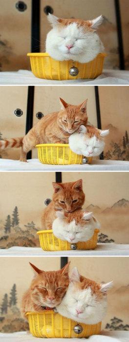 Где поместился один кот, хватит места и для второго.