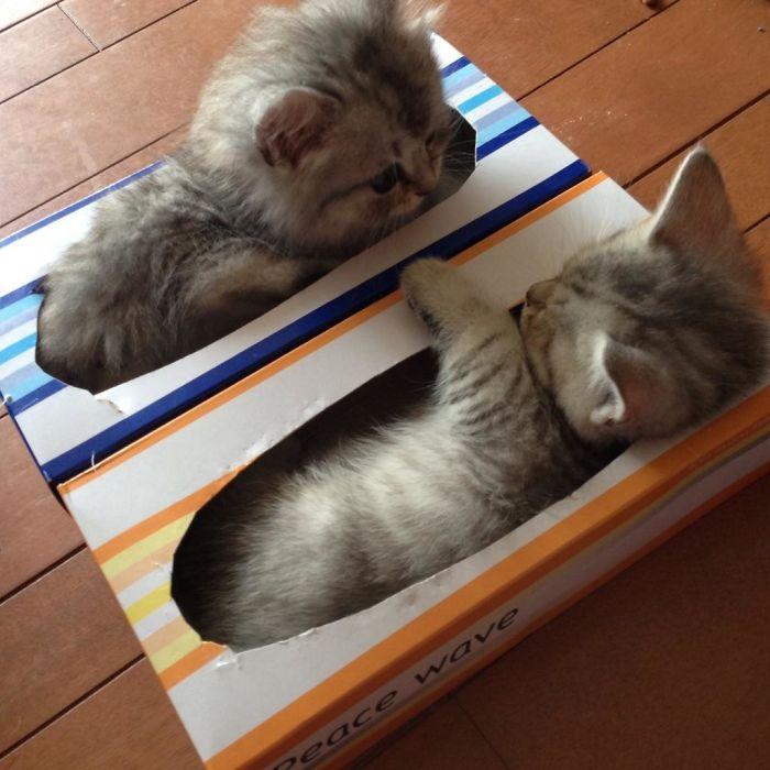 Первая тренировка начинающих кошачьих «коробочников».