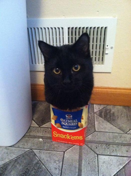 Черный кот, который нагло нарушает законы физики.