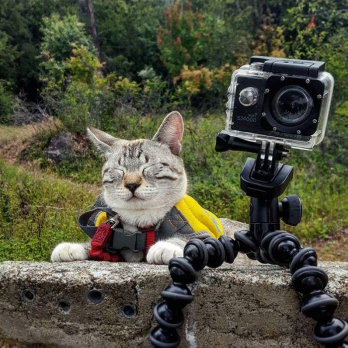 Кот «фотограф» в ожидании удачного кадра.