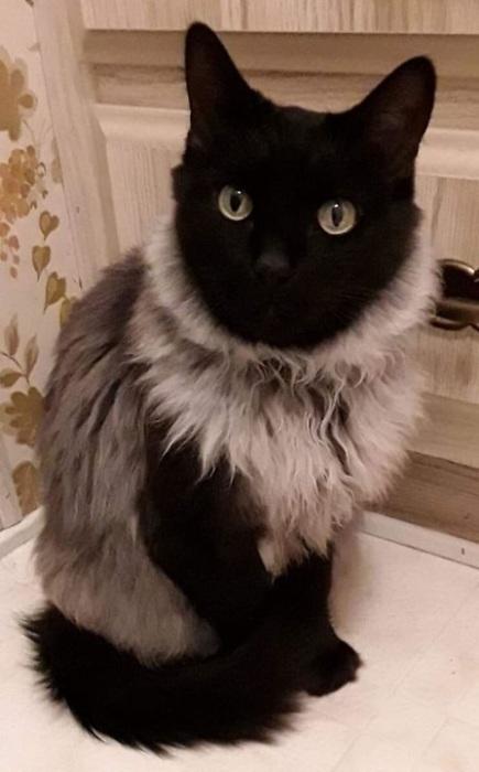 Очаровательная кошечка с большими глазами и пушистой шубке.